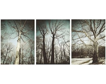 Winter Trees in Blizzard Blue - Set of 3  Nature Photographs - Tree Art - Wall Decor - Winter Bare Trees - Landscape - Nature Photograph