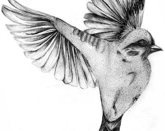 Sketched Sparrow