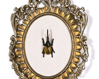 Hercules Beetle in Victorian Frame - 3D Wall Art Decor 7.5x11in