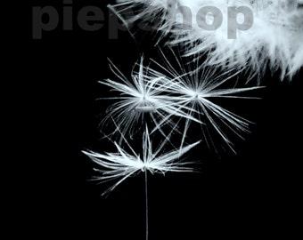 Free fall-Falling photography flower black white 10 x 15 cm