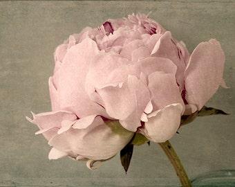 Peony Art, Peony Print, County Chic Decor, French Country Decor, Flower Wall Art, Bedroom Decor, Pink Art Work