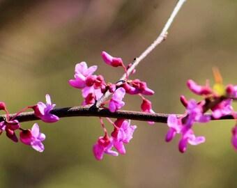 Vibrant pink flowers