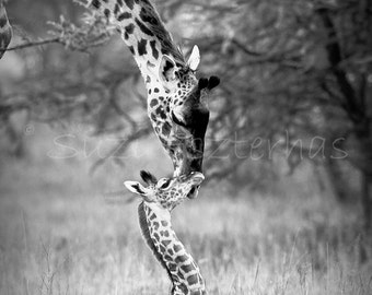 Baby Giraffe and Mom, Black and White Photo Print, African Safari, Baby Animals, African Wildlife , Nursery Wall Art, Kids Room, Boys Room