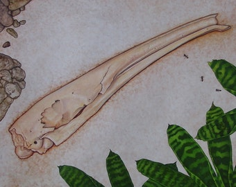 "Anteater Skull painting from the ""A"" page of The Skull Alphabet Book"