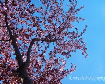 Blossom: Fine Arts/Color Photograph