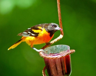 Oriole Jelly Feeder