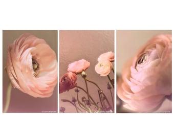 Pink Ranunculus Print Set - Set of 3 ranunculus flowers 8x10 photo peach still life photography 11x14 ranunculus wall art 16x20 mothers day