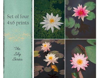 Fine Art Prints, Set of Four, Photo Set, Lily Art, Lily Flowers, Water Garden, Lily Pads, Pink, Waterlily, Flower Art, Botanical, Home Decor