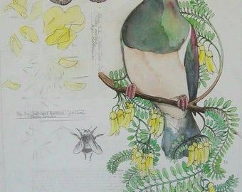 New Zealand Native Bird Card- Kereru