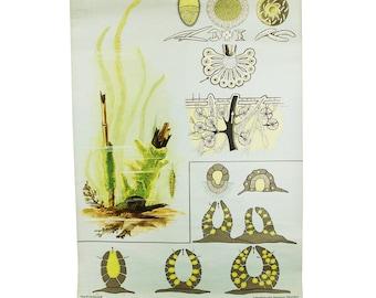 vintage jung koch quentell german school chart -- spongilla