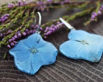 Hydrangea earrings Pressed flower earrings Blue Hydrangea jewelry Dry flower earrings Botanical earrings Sterling silver flower earrings