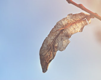 Leaf Skeleton Color Photo Print { sunlight, sunshine, texture, sky, tree, blue, brown, wall art, macro, nature & fine art photography }