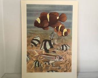1945 OCEAN LIFE LITHOGRAPH - original vintage print - large size underwater sea scene print - clown fish & Whitetail dascyllus