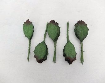 50 mulberry dark tip green holly leaves