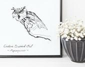 Screech Owl Print | 8&quo...