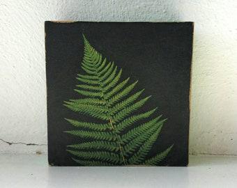 Fern photography, art on wood, nature themed, fern leaf, photo cube, wall decor, photo art, art cube, vintage look, wood block, distressed