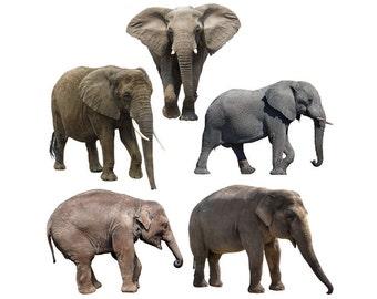 Elephant overlay photo animal photoshop png