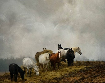 25% Memorial Day Sale gallery wrap horses country field hill fine art photography animals color