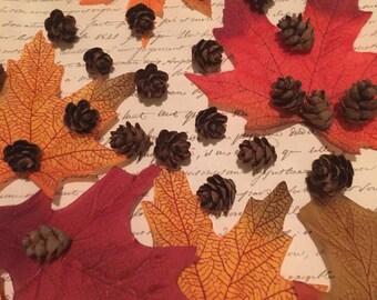 100 Fall Mini Pinecones Tiny Hemlock Pine Cones Autumn Wedding