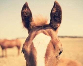 horse photography brown baby nursery wall art decor close up ears foal photograph animal