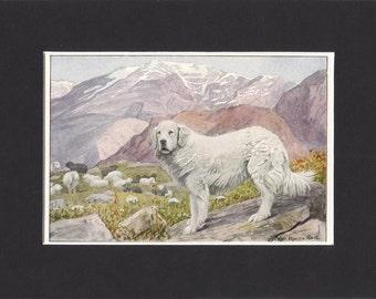 Pyrenean 1919 Dog Print by Louis Agassiz Fuertes Small Vintage Pyrenean Sheepdog Print Mounted with Mat Pyrenean Sheep Dog