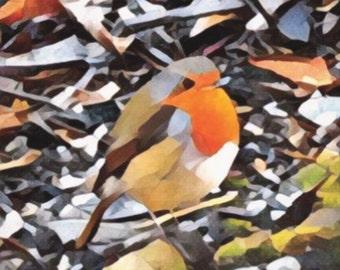 Canvas print: Robin