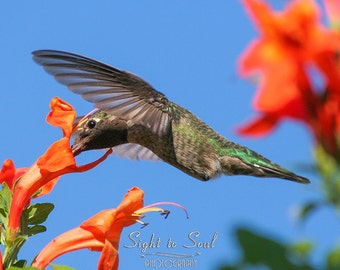 Hummingbird Gifts, bird photography, orange flowers & hummingbird photo, nature wall decor, fine art print, bird lover gift