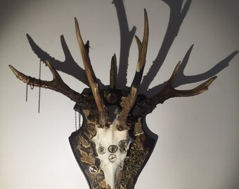 deer skull with added antlers