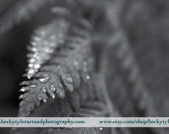 Dew on Fern, Black and White,  Fine Art Photo Print