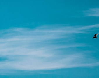 "Bird in the Blue Photography 17"" x 6"""