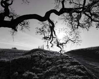 Black and White Sunset on a Hilltop