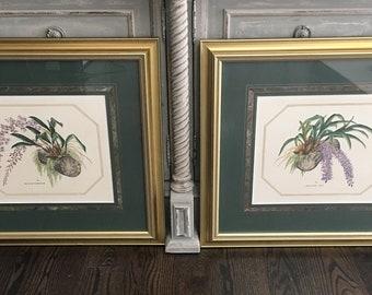 Pair Vintage Framed Botanical ORCHID Prints