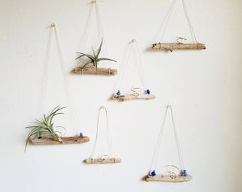 Driftwood Air Plant Holder, Small Airplant Hanger, Natural Boho Decor, Summer Decor, Beach House Wall Decor, Gardening Gift