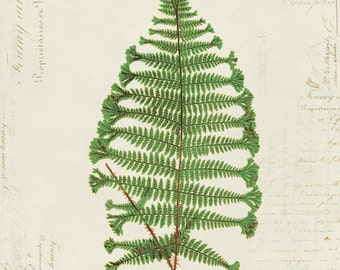 Vintage Fern on French Ephemera Print 8x10 P157