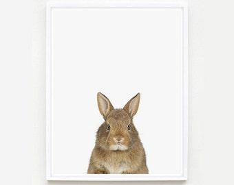 Baby Animal Nursery Art Print. Baby Bunny Little Darling. Farm Animal Wall Art. Animal Nursery Decor. Baby Animal Photo.