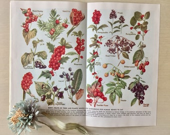 Vintage Botanicals -Original 1940's