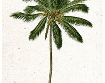 Coconut Palm Tree Botanical Island Tropical Tommy Bahama Style - Digital Image - Vintage Art Illustration