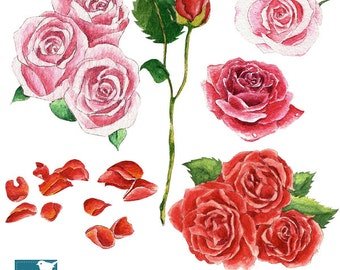 Watercolor Roses II Clipart - Hand Painted, card design, invitations, watercolor, paper crafts, hand drawn - INSTANT DOWNLOAD