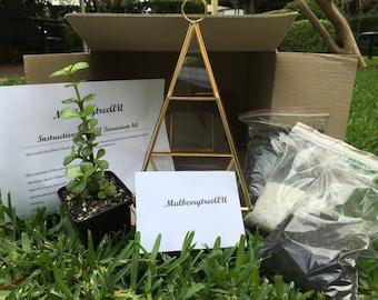DIY Terrarium kit (with plant)
