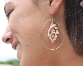 14kt Gold Filled Hoops Adorned with Center Cut Seashells