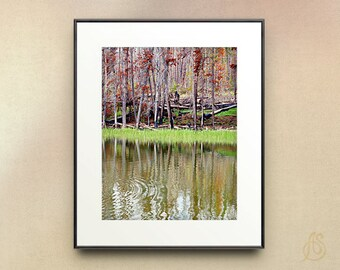 Landscape photography // Yellowstone National Park // Forest Trees //  8x10 8x12 11x14
