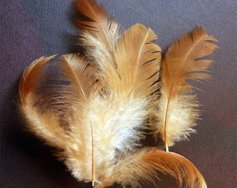 Natural red chicken feathers
