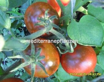 YUMMY, Famous Hungarian Kumato Tomatos, Best Taste Worldwide !! NON GMO