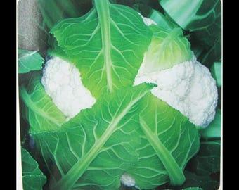 Cauliflower Seeds 100pcs