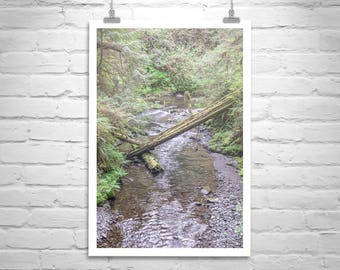 Pacific Northwest Art, Mountain Stream Picture, Washington State Photography, Olympic Peninsula Art, Rainforest Art, Washington State Gift