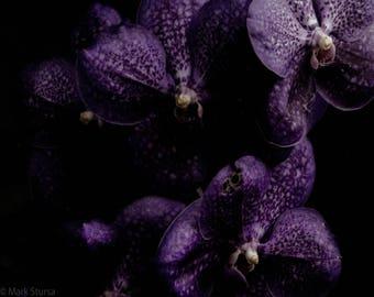 Purple Monster Flowers