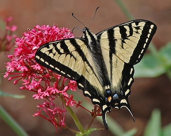 Butterfly Image, Nature Photography, Butterfly Photos, Summer Images