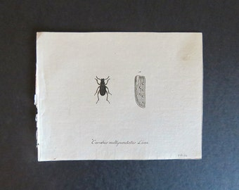 1700s Antique French Insect Engraving - Published by J. St. fee. - Hand Painted - Georgian