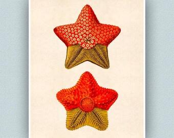 Étoile de mer imprimer 2, art poisson Star, étoile de mer art, art nautique, seastar, art nautique, Starfish pépinière décor, coastal Living, plage, 11 x 14