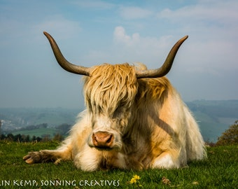 Scottish Highland  Cow photographic print, nature photography cow lover home decor